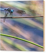 Dragonfly Walking A Tightrope Wood Print
