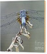 Dragonfly Wing Details II Wood Print