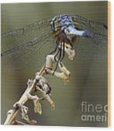 Dragonfly Wing Details Wood Print