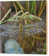 Dragonfly X-ray Wood Print