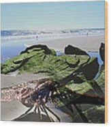 Dragonfly's Day At The Beach Wood Print