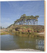 Dragons Back Budleigh Salterton Wood Print