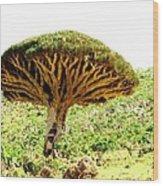 Dragon's Blood Tree 2 Wood Print
