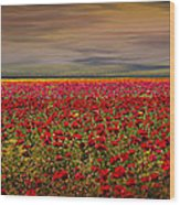 Drama Over The Flower Fields Wood Print