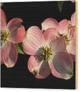 Dramatic Dogwood Flowers Wood Print