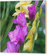 Dramatic Gladiolus Wood Print