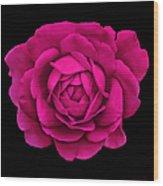 Dramatic Hot Pink Rose Portrait Wood Print
