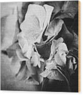 Dramatic Hydrangea In Black And White Wood Print