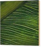 Dramatic Leaf Abstract Wood Print