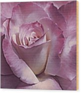 Dramatic Plum Rose Flower Wood Print