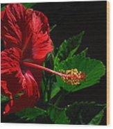 Dramatic Red Hibiscus Wood Print