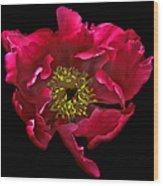 Dramatic Red Peony Flower Wood Print