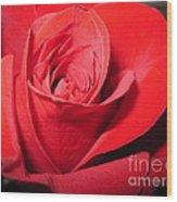 Dramatic Red Rose  Wood Print