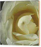 Dramatic White Rose 3 Wood Print