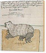 Drawing Of A Seal Wood Print