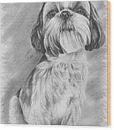Drawing Of A Shih Tzu Wood Print