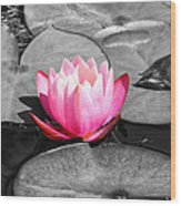 Dream Lily Wood Print by Mariola Bitner