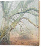 Dream Oak II Color 1 Wood Print