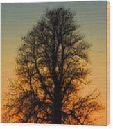 Dream Tree At Sunset Wood Print