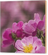 Pink Old Fashioned Rose Wood Print