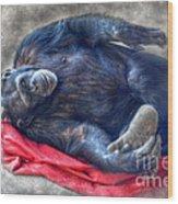 Dreaming Of Bananas Chimpanzee Wood Print
