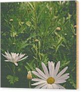 Dreaming Of Daisies Wood Print