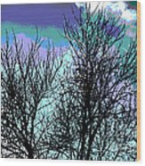 Dreaming Of Spring Through Icy Trees Wood Print