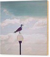 Dreaming Seagull Wood Print
