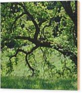 Dreaming Under The Old Oak Wood Print