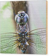 Dreaming With A Dragonfly Wood Print