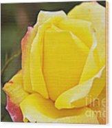 Dream's Come True Rose By Walter Herrit  Wood Print