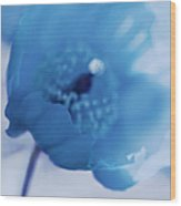 Dreams Of Blue Poppy Flower Wood Print