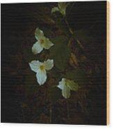 Dreamscapes - Trilliums 2 Wood Print