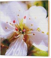 Dreamy Cherry Blossom Wood Print