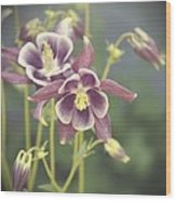 Dreamy Columbine Flowers Wood Print by Cathie Tyler