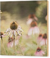 Dreamy Coneflowers Wood Print