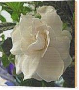 Dreamy Creamy Gardenia Wood Print