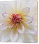Dreamy Dahlia Wood Print