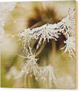Dreamy Dandelion Wood Print