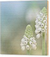 Dreamy Grape Hyacinth.... Wood Print