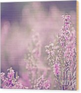Dreamy Pink Heather Wood Print