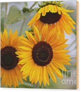 Dreamy Sunflower Day Wood Print