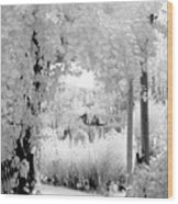 Dreamy Surreal Black White Infrared Arbor Wood Print