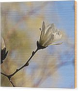 Dreamy Wild Magnolia In The Forest Wood Print
