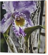 Dressed In Purple Wood Print