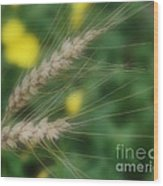 Dried Grass In Soft Focus Wood Print