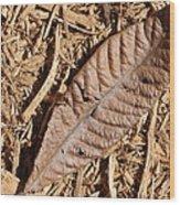 Dried Leaf Wood Print