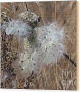 Dried Milk Weed  Wood Print