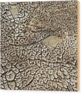 Dried Mud Pan It Time Of Drought Wood Print