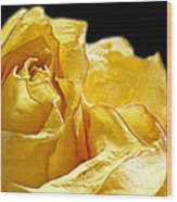 Dried Yellow Rose II Wood Print